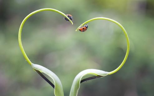 love lady bugs